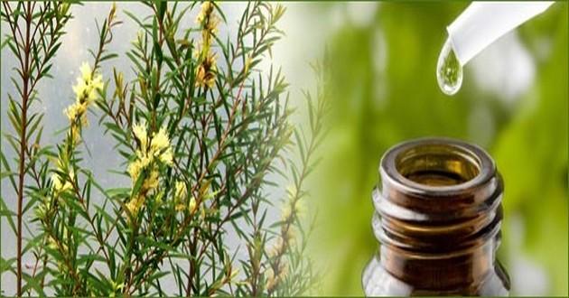 Урепление ногтей маслом чайного дерева